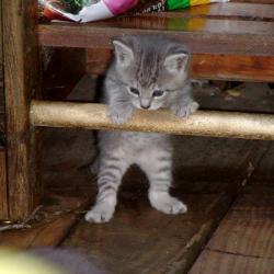Random Kitten